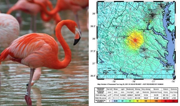 Судя по всему, фламинго способны предчувствовать стихию