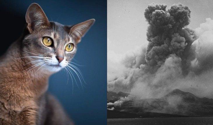 Кошки предсказали извержение Монтань-Пеле