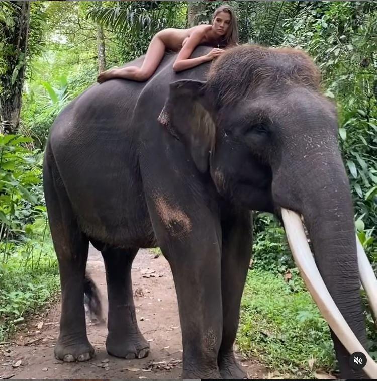 22-летняя модель снялась обнаженной на слоне. Фото: кадр видео.