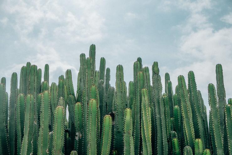 аже кактус, который годами считали ценным источником влаги для заблудшего путника, на самом деле токсичен и непригоден к пище