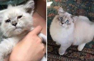 10 фото бездомных котов до и после того, как их спасли