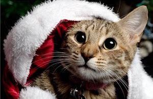 Самые новогодние коты