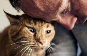 Какую кошку выбрать людям этих типажей, чтобы она стала лучшим другом?